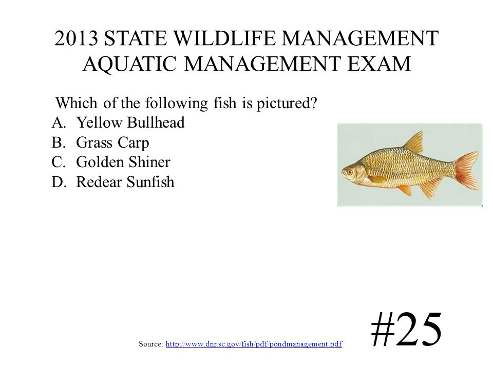 2013 STATE WILDLIFE MANAGEMENT AQUATIC MANAGEMENT EXAM Source: http://www.dnr.sc.gov/fish/pdf/pondmanagement.pdfhttp://www.dnr.sc.gov/fish/pdf/pondmanagement.pdf #25 Which of the following fish is pictured.