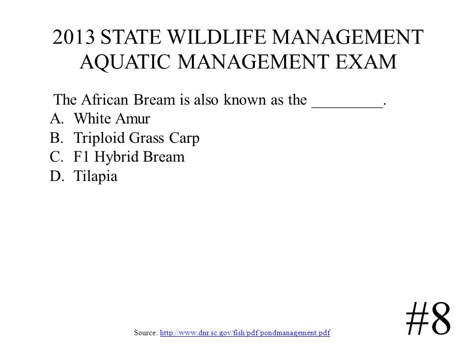 2013 STATE WILDLIFE MANAGEMENT AQUATIC MANAGEMENT EXAM Source: http://www.dnr.sc.gov/fish/pdf/pondmanagement.pdfhttp://www.dnr.sc.gov/fish/pdf/pondmanagement.pdf #8 The African Bream is also known as the _________.