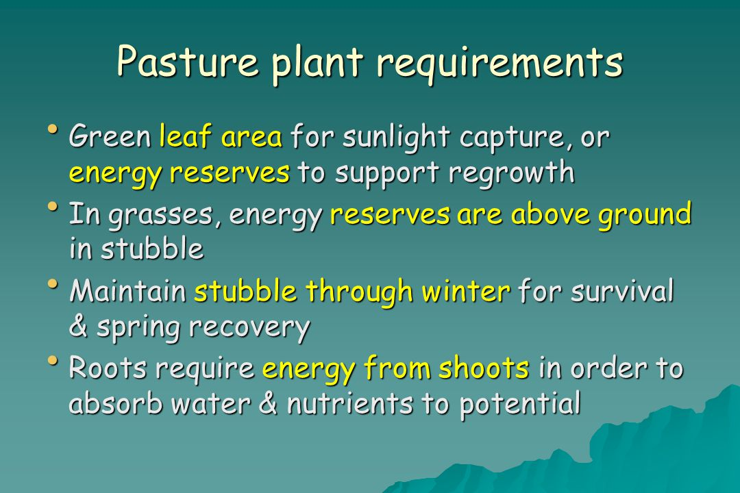 Pasture plant requirements Green leaf area for sunlight capture, or energy reserves to support regrowth Green leaf area for sunlight capture, or energy reserves to support regrowth In grasses, energy reserves are above ground in stubble In grasses, energy reserves are above ground in stubble Maintain stubble through winter for survival & spring recovery Maintain stubble through winter for survival & spring recovery Roots require energy from shoots in order to absorb water & nutrients to potential Roots require energy from shoots in order to absorb water & nutrients to potential