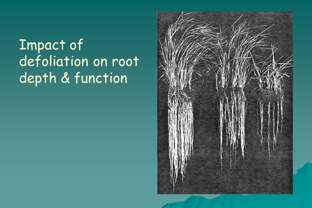 Impact of defoliation on root depth & function