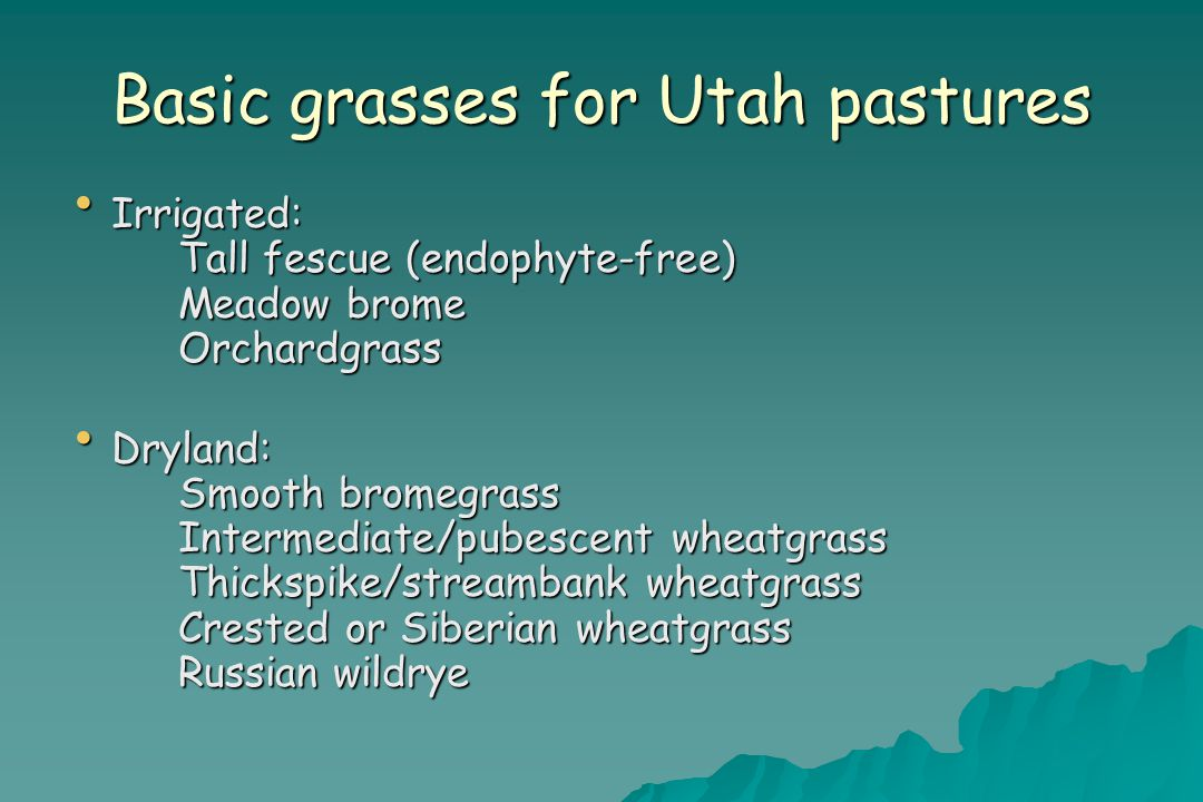 Basic grasses for Utah pastures Irrigated: Tall fescue (endophyte-free) Meadow brome Orchardgrass Irrigated: Tall fescue (endophyte-free) Meadow brome Orchardgrass Dryland: Smooth bromegrass Intermediate/pubescent wheatgrass Thickspike/streambank wheatgrass Crested or Siberian wheatgrass Russian wildrye Dryland: Smooth bromegrass Intermediate/pubescent wheatgrass Thickspike/streambank wheatgrass Crested or Siberian wheatgrass Russian wildrye