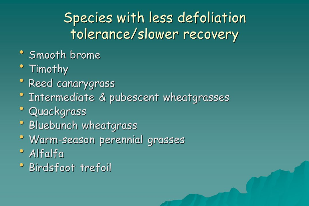 Species with less defoliation tolerance/slower recovery Smooth brome Smooth brome Timothy Timothy Reed canarygrass Reed canarygrass Intermediate & pubescent wheatgrasses Intermediate & pubescent wheatgrasses Quackgrass Quackgrass Bluebunch wheatgrass Bluebunch wheatgrass Warm-season perennial grasses Warm-season perennial grasses Alfalfa Alfalfa Birdsfoot trefoil Birdsfoot trefoil