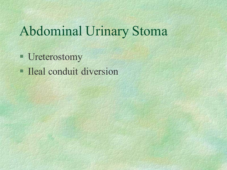 Abdominal Urinary Stoma §Ureterostomy §Ileal conduit diversion