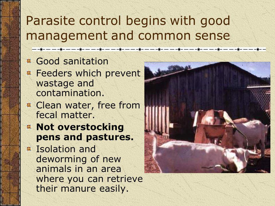 Pasture Management to reduce barber pole worm problems Use clean or safe pastures – easy to say, difficult to implement for entire grazing cycle Use multispecies grazing Use alternative forages Make wise management decisions about pasture height, pasture rest, and pasture rotation
