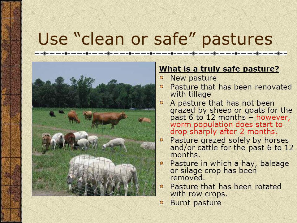 Things to consider when using intensive rotational grazing Are there safe pastures that animals can be moved onto as grazing season progresses.