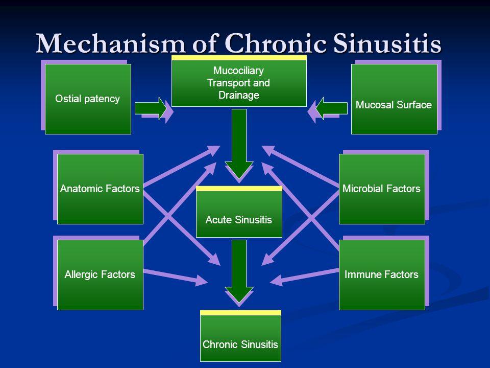 Mechanism of Chronic Sinusitis Anatomic Factors Chronic Sinusitis Immune Factors Microbial Factors Acute Sinusitis Mucosal Surface Mucociliary Transpo