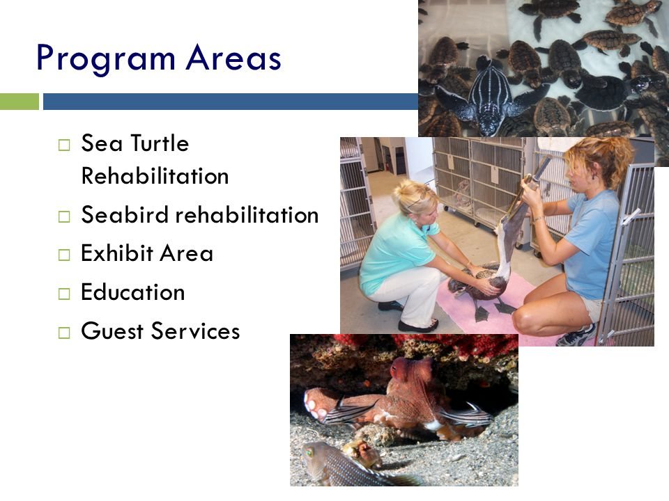 Program Areas Sea Turtle Rehabilitation Seabird rehabilitation Exhibit Area Education Guest Services