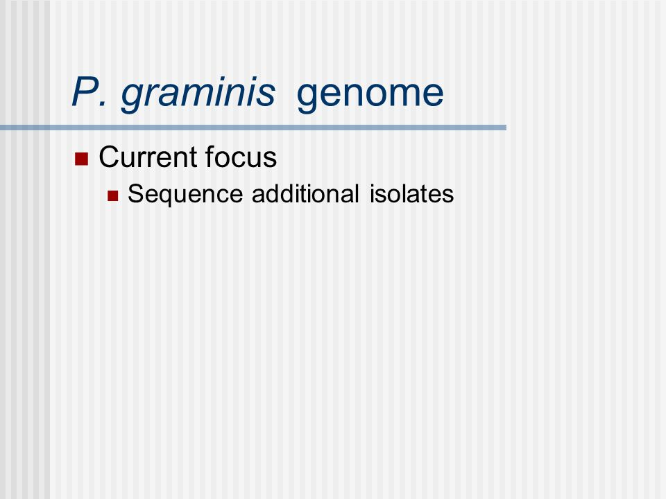 P. graminis genome Current focus Sequence additional isolates