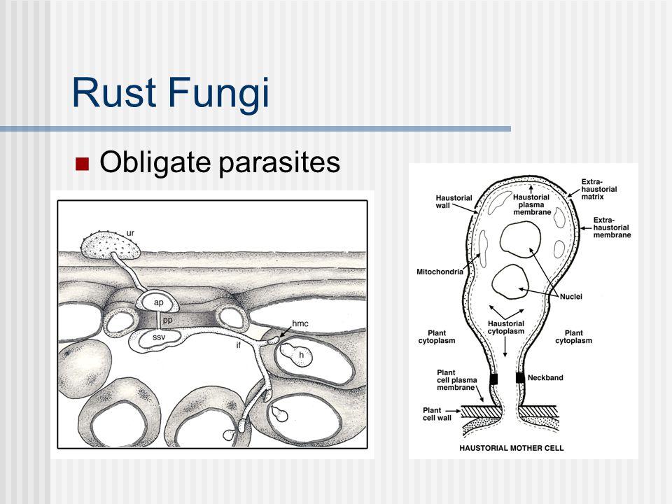 Rust Fungi Obligate parasites