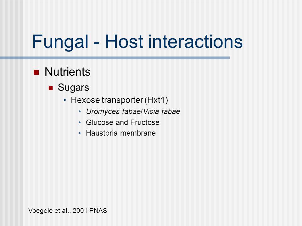 Fungal - Host interactions Nutrients Sugars Hexose transporter (Hxt1) Uromyces fabae/Vicia fabae Glucose and Fructose Haustoria membrane Invertase (plant and fungal) Sucrose glucose & fructose Voegele et al., 2001 PNASVoegele et al., 2006, MPMI