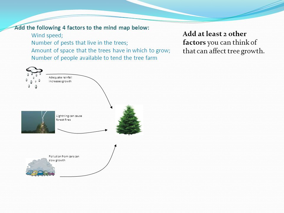 Add the following 4 factors to the mind map below: Wind speed; Number of pests that live in the trees; Amount of space that the trees have in which to grow; Number of people available to tend the tree farm Adequate rainfall increases growth Lightning can cause forest fires Pollution from cars can slow growth Add at least 2 other factors you can think of that can affect tree growth.