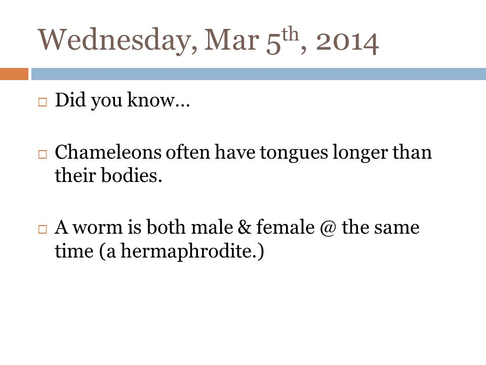 Wednesday, Mar 5 th, 2014 Did you know… Chameleons often have tongues longer than their bodies.
