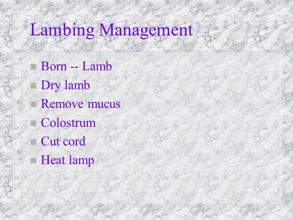 Lambing Management n Born -- Lamb n Dry lamb n Remove mucus n Colostrum n Cut cord n Heat lamp