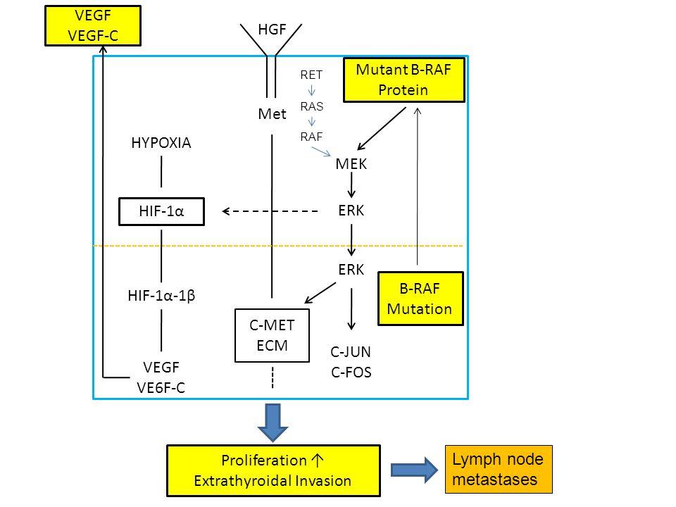 HGF Met Mutant B-RAF Protein MEK ERK C-MET ECM ERK B-RAF Mutation C-JUN C-FOS HYPOXIA HIF-1α HIF-1α-1β VEGF VE6F-C VEGF VEGF-C Proliferation Extrathyroidal Invasion Lymph node metastases RET RAS RAF