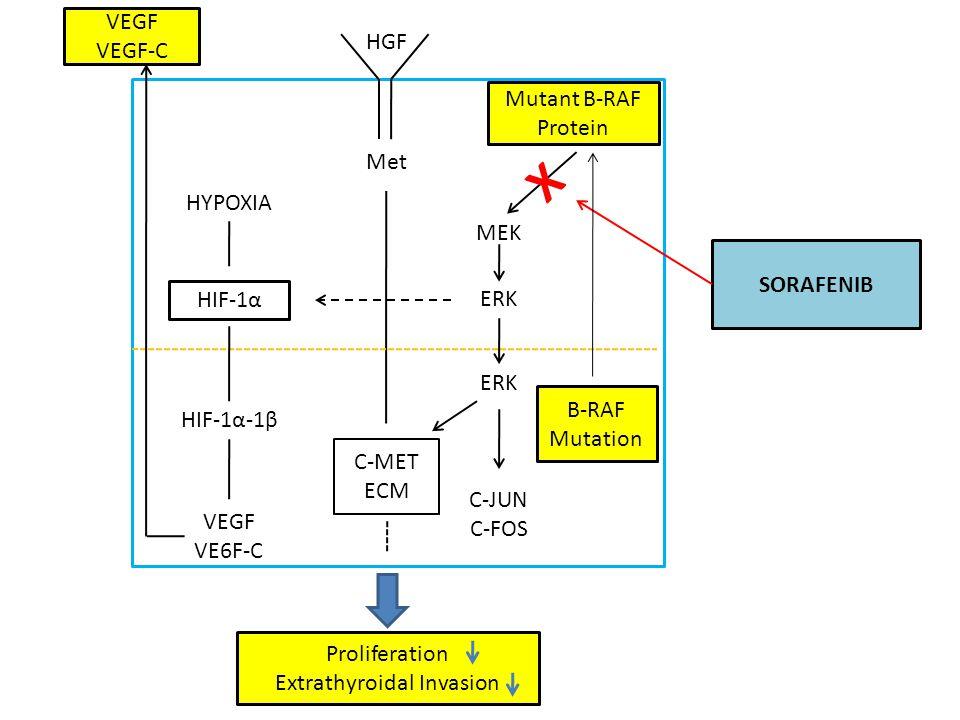 HGF Met Mutant B-RAF Protein MEK ERK C-MET ECM ERK B-RAF Mutation C-JUN C-FOS HYPOXIA HIF-1α HIF-1α-1β VEGF VE6F-C VEGF VEGF-C Proliferation Extrathyroidal Invasion SORAFENIB X