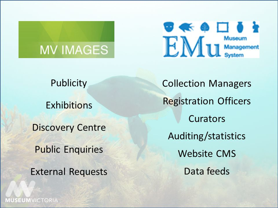 Publicity Exhibitions Discovery Centre Public Enquiries External Requests Collection Managers Registration Officers Curators Auditing/statistics Website CMS Data feeds