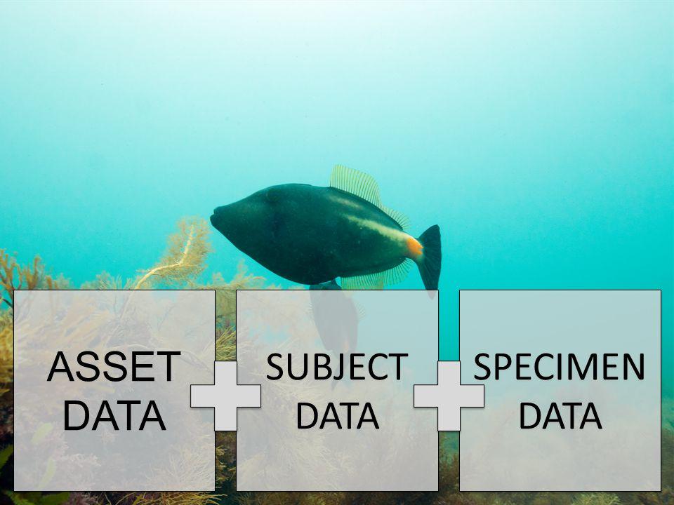 ASSET DATA ASSET DATA SUBJECT DATA SUBJECT DATA SPECIMEN DATA SPECIMEN DATA