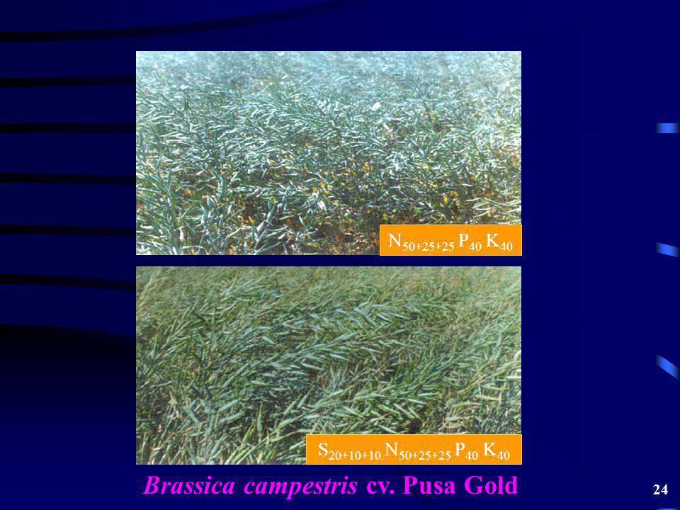 Brassica campestris cv. Pusa Gold N 50+25+25 P 40 K 40 S 20+10+10 N 50+25+25 P 40 K 40 24