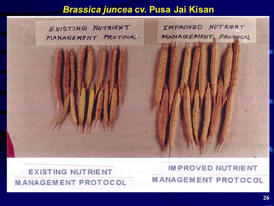 Brassica juncea cv. Pusa Jai Kisan 26