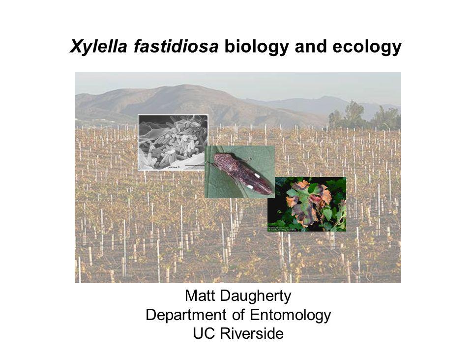 Xylella fastidiosa biology and ecology Matt Daugherty Department of Entomology UC Riverside