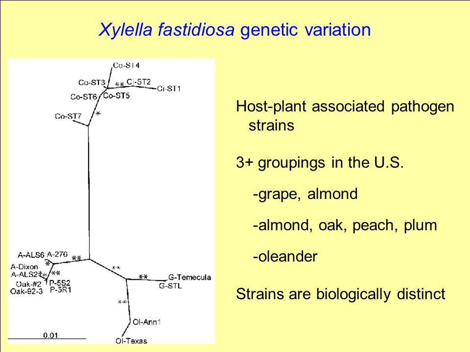 Xylella fastidiosa genetic variation Host-plant associated pathogen strains 3+ groupings in the U.S. -grape, almond -almond, oak, peach, plum -oleande
