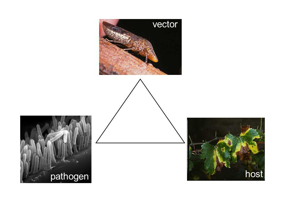 vector pathogen host