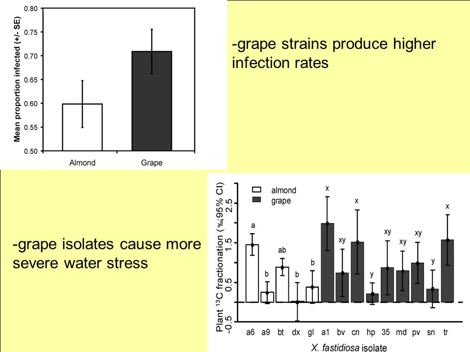 -grape isolates cause more severe water stress -grape strains produce higher infection rates