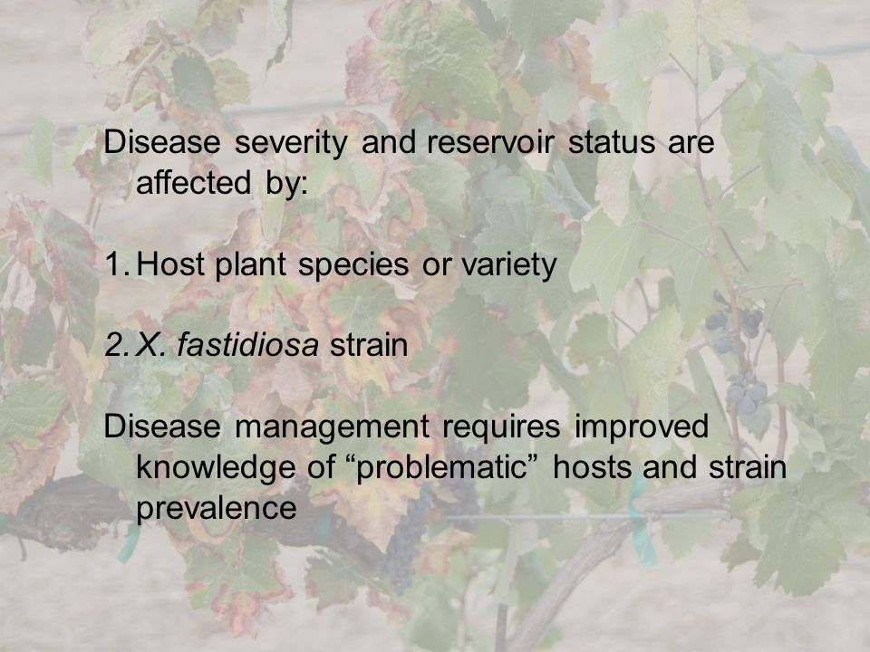 Disease severity and reservoir status are affected by: 1.Host plant species or variety 2.X. fastidiosa strain Disease management requires improved kno