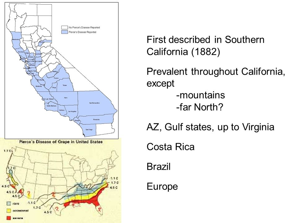 First described in Southern California (1882) Prevalent throughout California, except -mountains -far North? AZ, Gulf states, up to Virginia Costa Ric