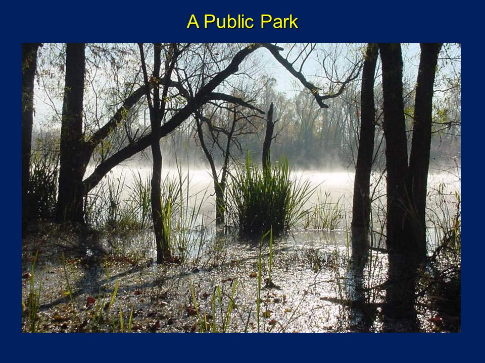A Public Park