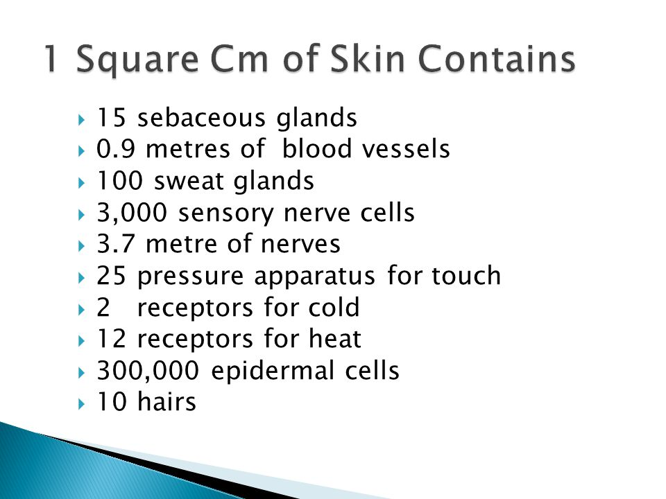 Dermis loses 80% of its original thickness 40% less collagen Sebum and sweat production is reduced Epidermal layer separates more easily from the dermis Elastin fibres decrease in number but increase in size, thus making the skin stiff Decrease in Langerhan cells - thus the immune system functions Small blood vessels diminish by 40% vitamin D, collagen and moisture migration of capillary epithelial cells epidermal turnover fragility of capillaries