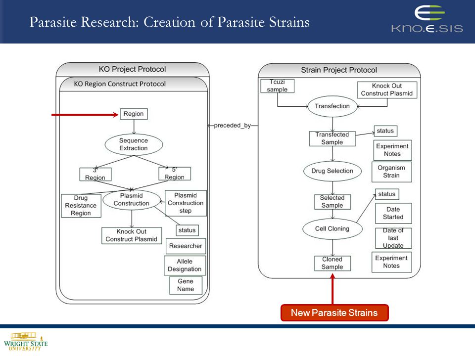 Provenance in Parasite Research *T.cruzi Semantic Problem Solving Environment Project, Courtesy of D.B.