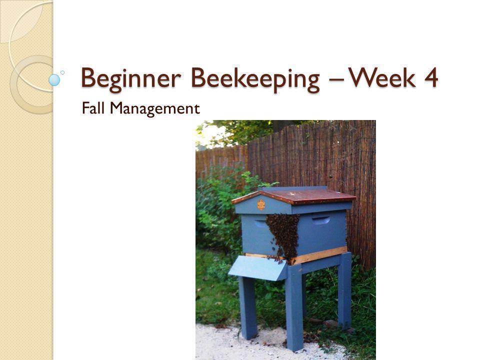 Beginner Beekeeping – Week 4 Fall Management