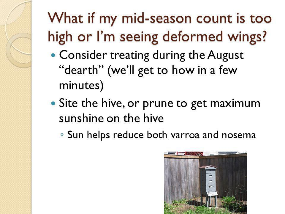 What if my mid-season count is too high or Im seeing deformed wings? Consider treating during the August dearth (well get to how in a few minutes) Sit