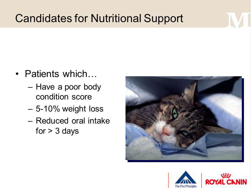 Candidates for Nutritional Support Patients which… –Have a poor body condition score –5-10% weight loss –Reduced oral intake for > 3 days