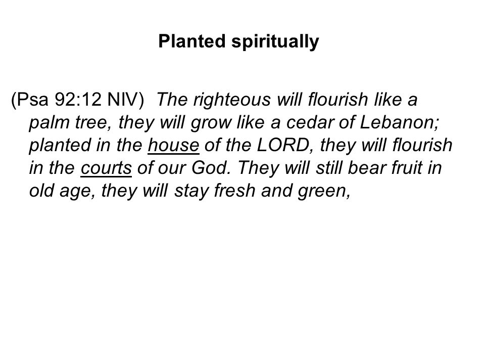 Planted spiritually (Psa 92:12 NIV) The righteous will flourish like a palm tree, they will grow like a cedar of Lebanon; planted in the house of the