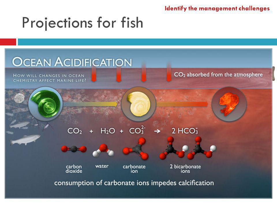 Projections for fish Finfish distribution shifts Cold-water: cod; herring Warmer-water: sole, red mullet, seabass Shellfish Oysters, mussels, scallops Ocean acidification Identify the management challenges http://www.thefishsociety.co.uk