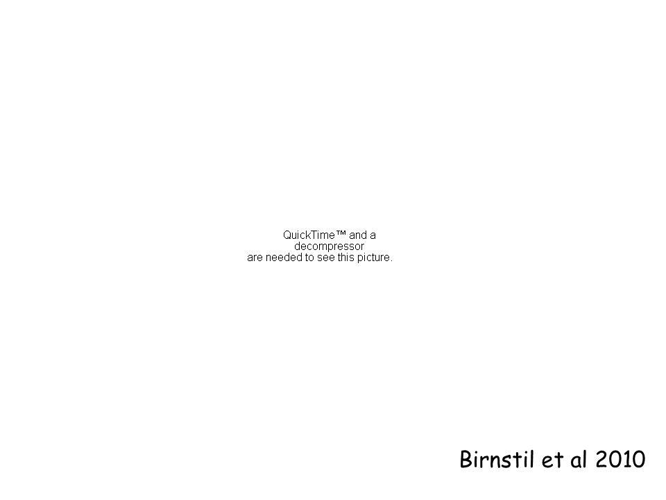 Birnstil et al 2010