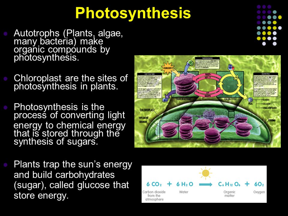 How is photosynthesis divided.