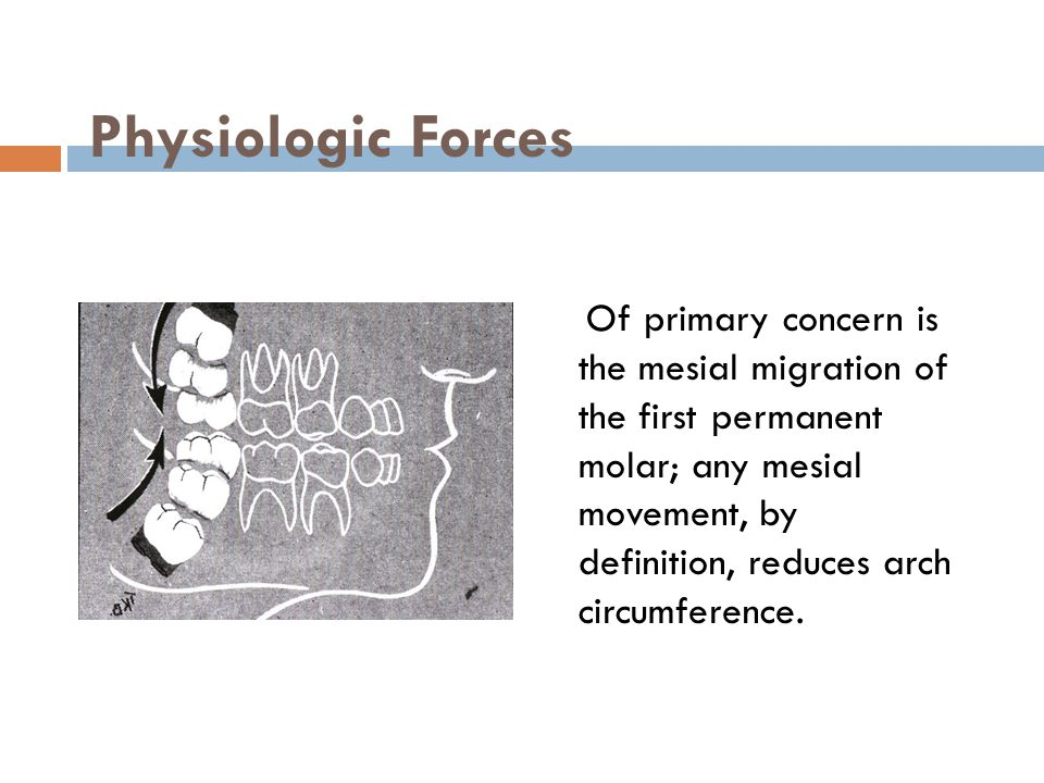 Physiologic Forces Of primary concern is the mesial migration of the first permanent molar; any mesial movement, by definition, reduces arch circumfer