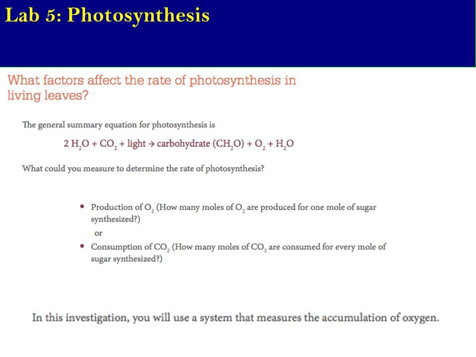 Lab 5: Photosynthesis