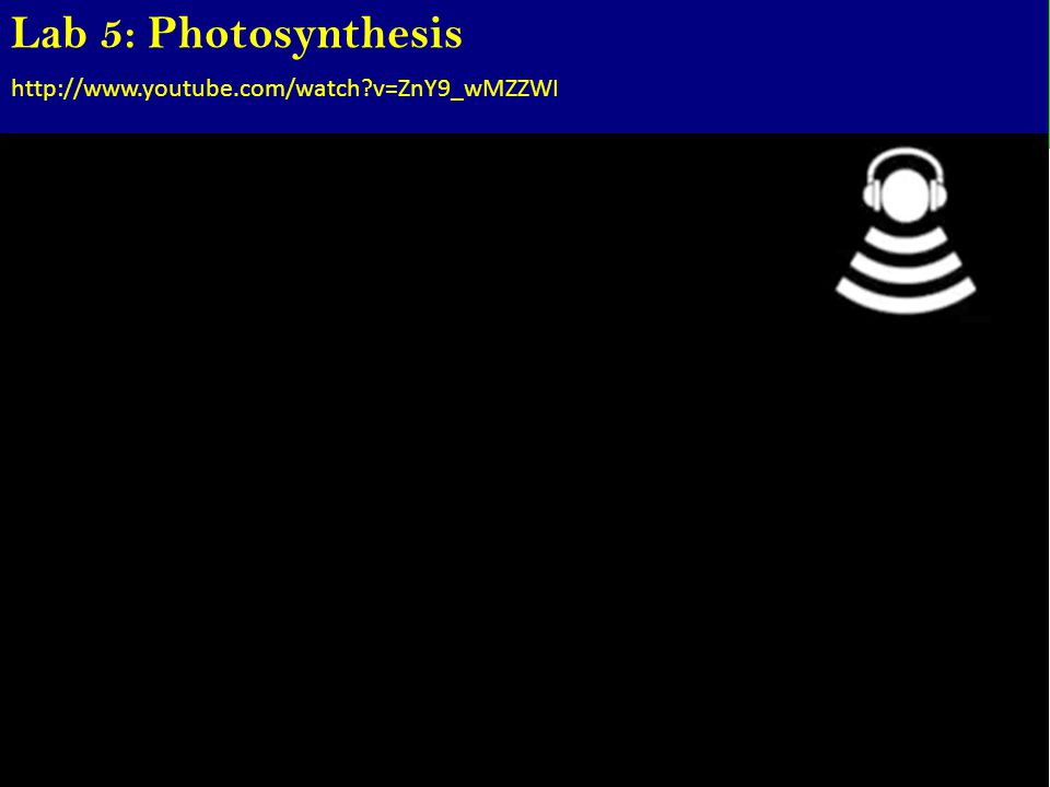 Lab 5: Photosynthesis http://www.youtube.com/watch?v=ZnY9_wMZZWI