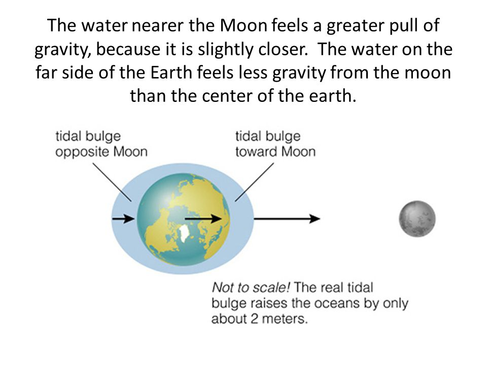 The water nearer the Moon feels a greater pull of gravity, because it is slightly closer.
