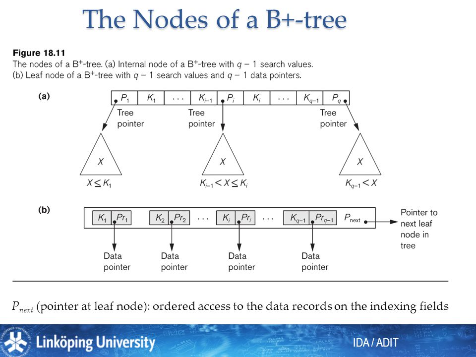 IDA / ADIT The Nodes of a B+-tree P next (pointer at leaf node): ordered access to the data records on the indexing fields