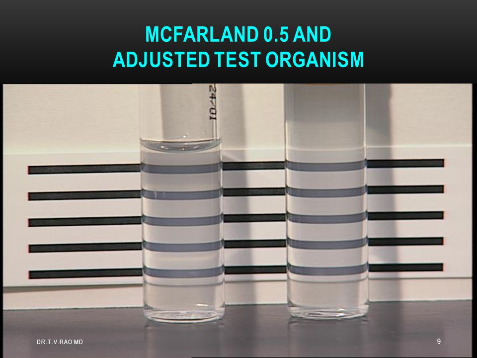 Within 15 minutes after adjusting the turbidity of the inoculum suspension, dip a sterile non-toxic swab on an applicator into the adjusted suspension.