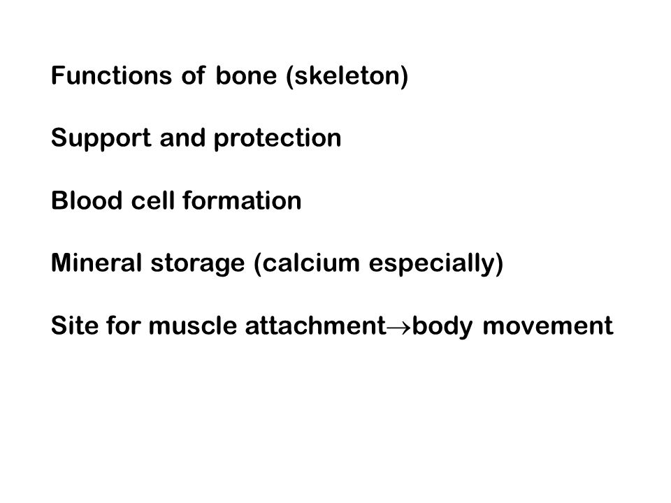 Functions of bone (skeleton) Support and protection Blood cell formation Mineral storage (calcium especially) Site for muscle attachment body movement