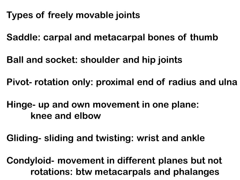 Ball And Socket Joint Shoulder Ball And Socket Shoulder