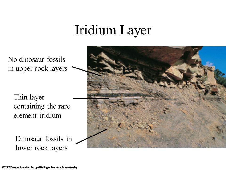 Iridium Layer Dinosaur fossils in lower rock layers No dinosaur fossils in upper rock layers Thin layer containing the rare element iridium