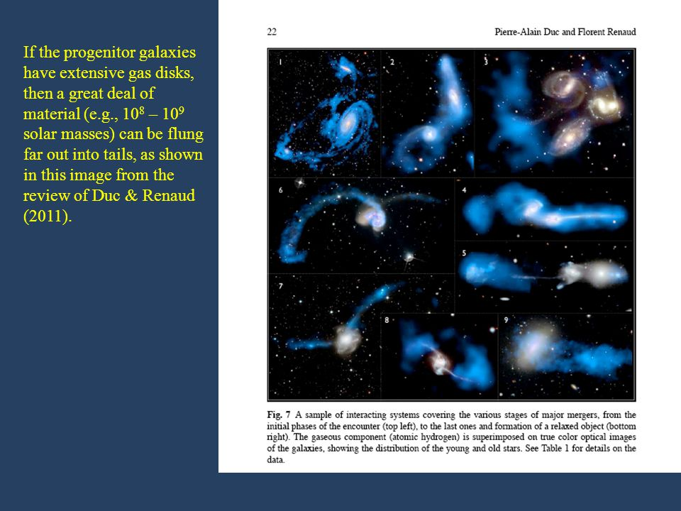 If the progenitor galaxies have extensive gas disks, then a great deal of material (e.g., 10 8 – 10 9 solar masses) can be flung far out into tails, as shown in this image from the review of Duc & Renaud (2011).