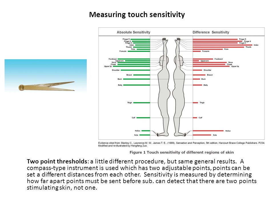 Measuring touch sensitivity Two point thresholds: a little different procedure, but same general results.